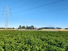 Bewässerung unserer Kartoffeln im Lendersdorfer Feld