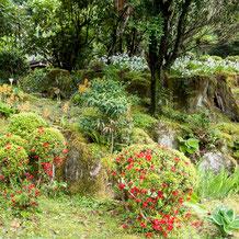 阿弥陀寺境内の築山 (landscape garden)