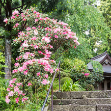 妙法山の屋久島石楠花(ヤクシマシャクナゲ)