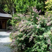 妙法山の萩(はぎ)の花