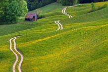 Gewundener Feldweg über eine Wiesenlandschaft