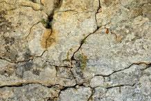 Tiefe Risse in einer Mauer