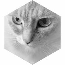 Katze beobachtet