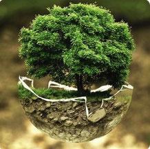 Im Focus der Umwelt