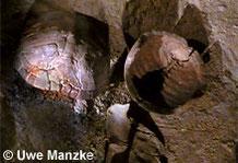 Europäische Sumpfschildkröte: subfossil, gefunden in einem Moor in Südschweden (Exponate Malmö Museum).