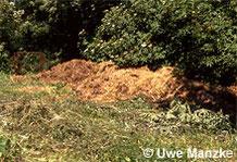 Ringelnatter: Pferdemisthaufen werden oft als Eiablageplatz genutzt.