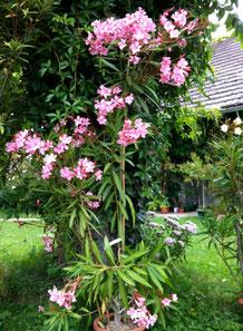 OLEANDER HAUS, Oleander Garten, Magaly