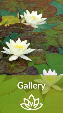 Der Teichsauger Gallery