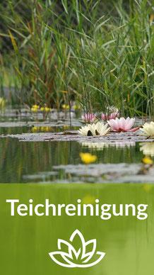 der Teichsauger - Teichreinigung