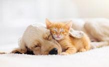 個人セッション | 犬が吠える理由と対策