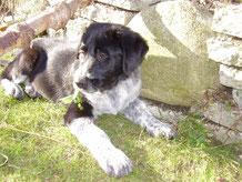 März 2007  -- Ben ist bei uns eingezogen ( 21 Bilder )