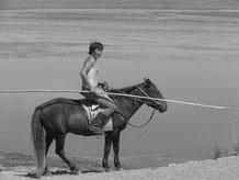 Pour ramener le bétail a cheval