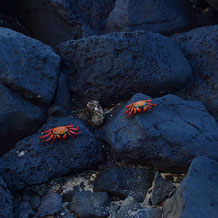 Galapagos July_16