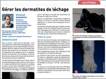 Dermatites de léchage du chien