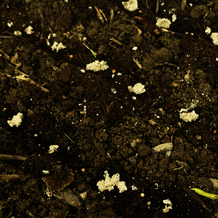 Ausgesähte Sandhäufchen, dazwischen immer eine Radieschen Samen