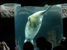 旭山動物園 アザラシ