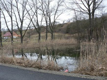 Teich am Sportplatz von Wickerstedt - 2010 von uns erworben
