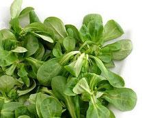 Valerianella songino: proprietà e valori nutrizionali