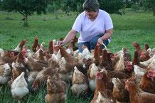 So leben glückliche und gesunde Hühner auf dem Bächlehof in Bottenau