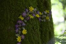 Blumen am Baum