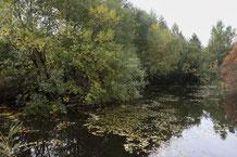 Verbuschte Uferbereiche