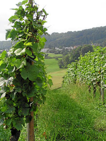 Wein aus Integrierter Produktion