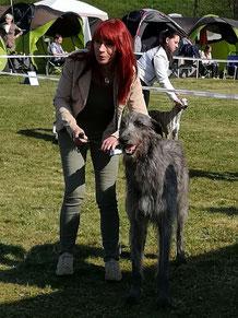 Scottish Deerhounds aus VDH Zucht! Wir züchten typvolle Scottish Deerhounds aus Familien-Aufzucht! DWZRV/VDH/FCI geprüfte Deerhound Zuchtstätte!