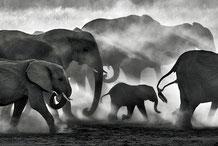 Staub trübt den Schlussspurt in Namibia