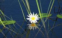 Ist sie nicht wunderbar, die Natur?