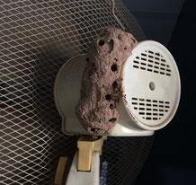 Wespen- oder Termitennest oder vielleicht doch ganz was anderes?
