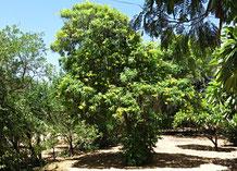 Blühender Baum in meinem Garten