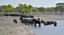 Elefanten, die Rettung für den Guide und uns