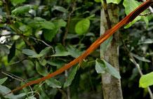 Was das wohl Braunes im grünen Buschwerk sein mag?