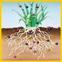 Planta captando minerales por las raíces Nutrición Ortomolecular Herbolario Alquimista Arrecife Lanzarote