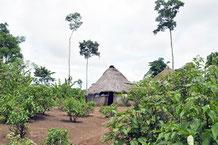 Cabane Achuar