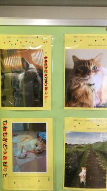 越谷市役所で実施している我が家自慢のペット写真展