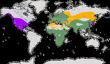 Karte zur Verbreitung der Turteltauben.