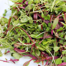 Are Baby Greens the Healthiest Greens?