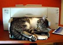Der Drucker wird zur Zeit anders genutzt.