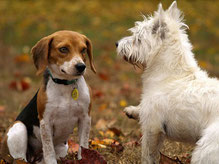 Les différents troubles de comportements du chien