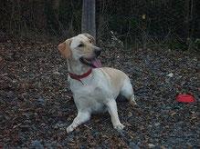 Témoignage Éducation canine dressage Charente Maritime (133)