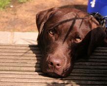 Le chien peut reconnaître des visages familiers à partir d'images