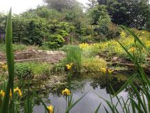 The Ponds in Springtime
