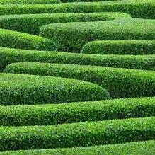 Das Label Dsiho - geheimnisvoll wie ein Irrgarten. Foto: Buchsbaumhecken-Labyrinth, Quelle: Fotolia