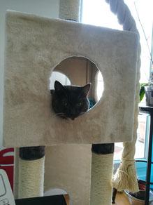 Chat adore arbre à chat