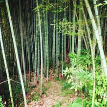 英語村竹林