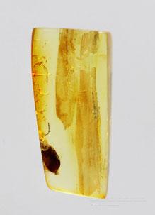 Инклюзы в янтаре: Coleoptera, Carabidae