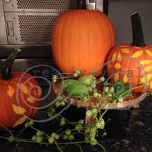 Herbst Kurs, Kürbis verzieren