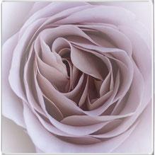 Hexenrosengarten Rosenblog