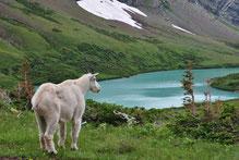 Mietwagenreise Glacier Nationalpark